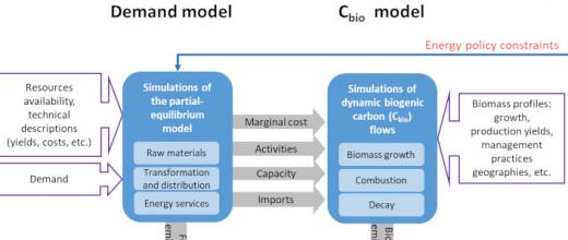 Dynamic modeling carbon neutrality